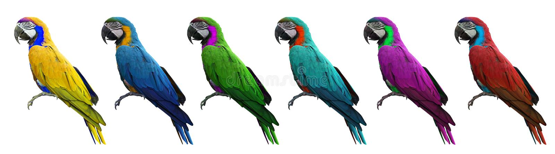 Groupe de l'oiseau coloré d'aras d'isolement sur le fond blanc avec photographie stock