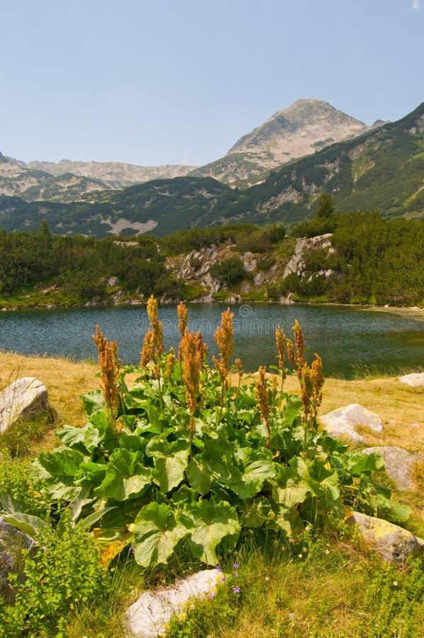 Groupe de lac sur la montagne Pirin images libres de droits