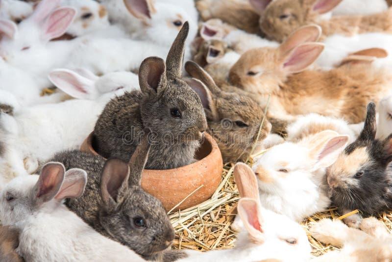 Groupe de lapins se reposant dans le magasin de b?tes et l'attente l'acheteur Concept animal et beau d'animaux familiers images libres de droits