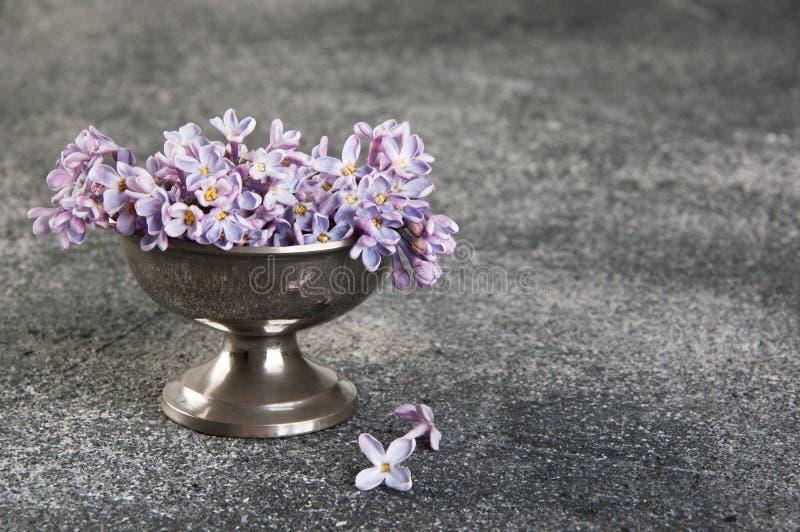 Groupe de lilas dans la cuvette de vintage sur le fond gris photos stock