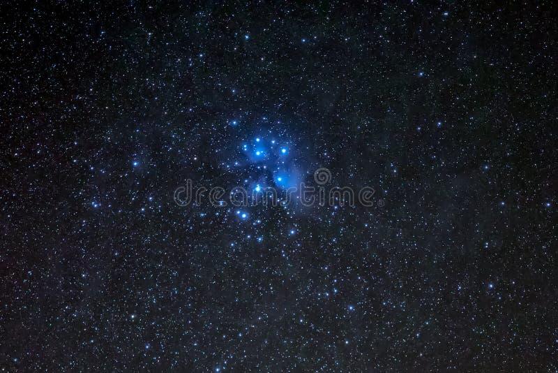 Groupe de M45, de Pleiades ou les sept soeurs image libre de droits
