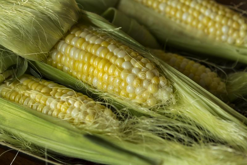 Groupe de maïs frais cru image stock