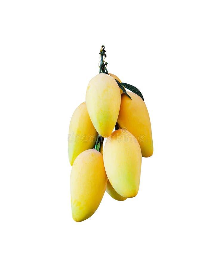 Groupe de mangues jaunes mûres artificielles avec la feuille d'isolement sur le fond blanc avec le chemin de coupure photos libres de droits