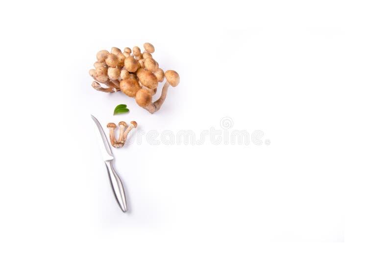 Groupe de mellea d'Armillaria photos stock