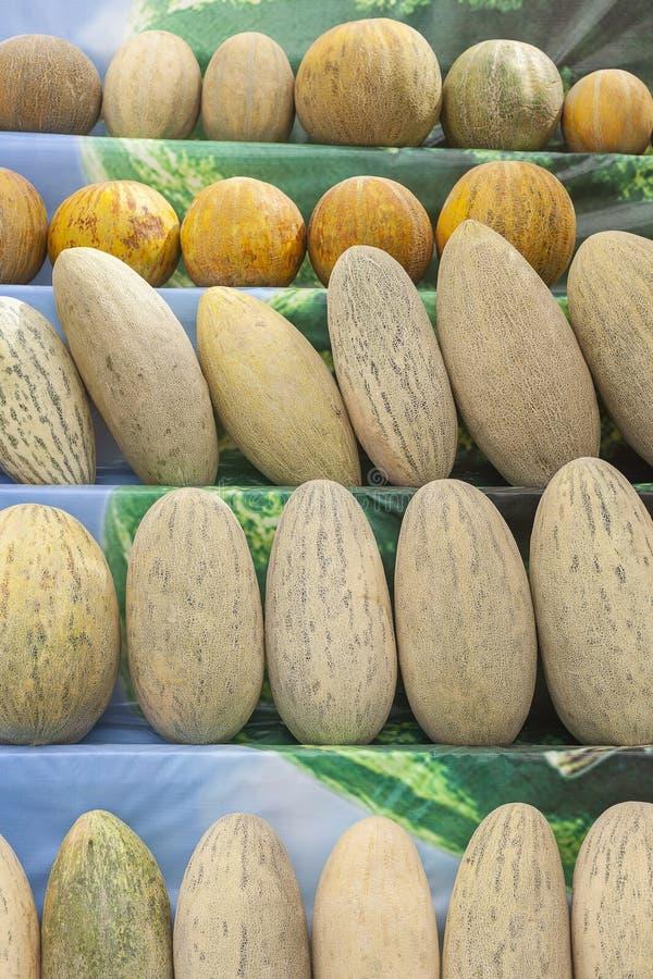 Groupe de melons doux jaunes mûrs frais Melons de cantaloup à vendre dans la ferme organique images libres de droits