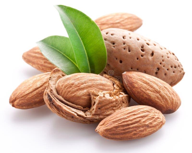 Groupe de noix d'amande. photos libres de droits