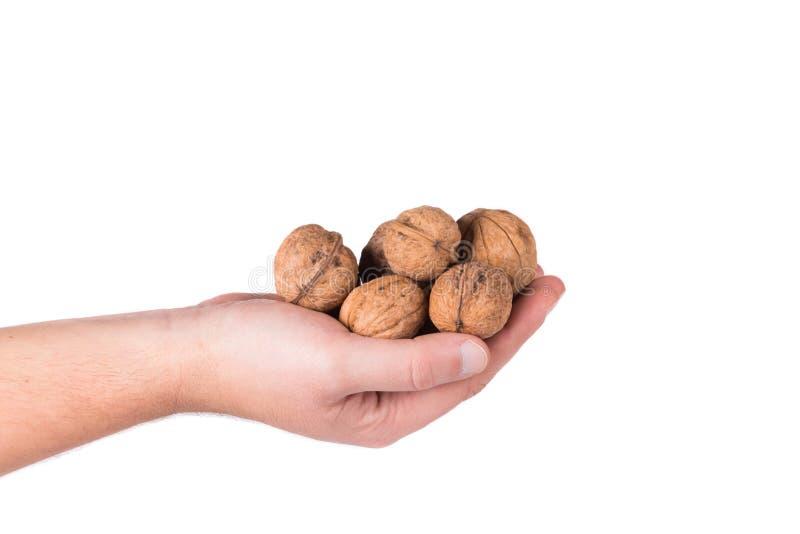 Groupe de noix dans des mains photographie stock
