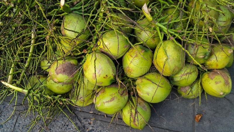 Groupe de noix de coco verte fraîche photos libres de droits
