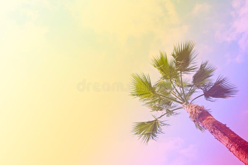 Groupe de palmettes tropicales sur la branche sans fruits Concept gratuit de nature de pollution Fond de Banana Republic photo stock