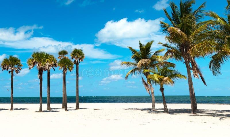 Groupe de palmier à la plage photographie stock