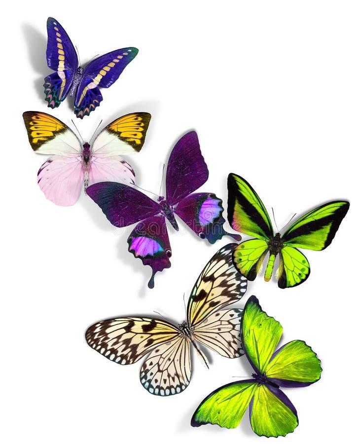 Groupe de papillons illustration de vecteur