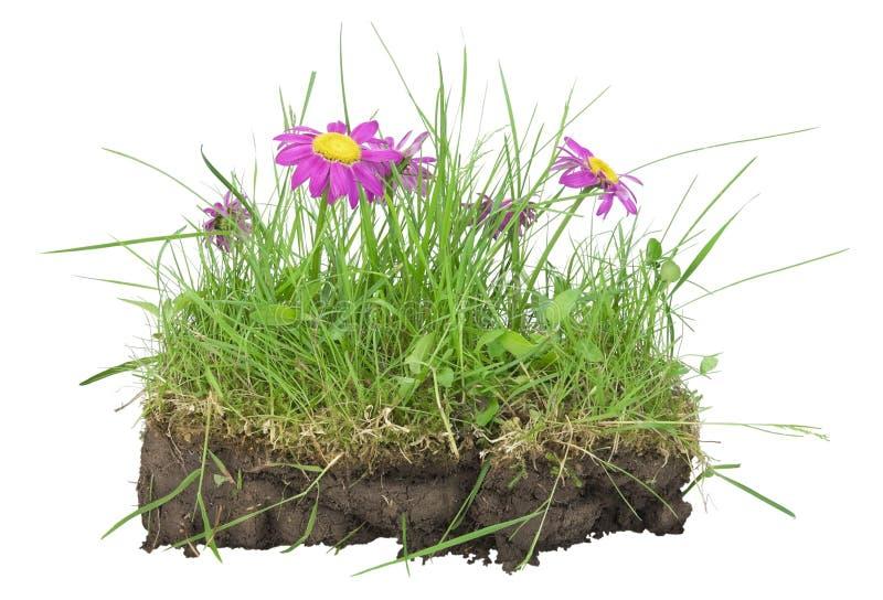 groupe de pelouse mon concept de la terre photo stock image du gazon nature 19843644. Black Bedroom Furniture Sets. Home Design Ideas