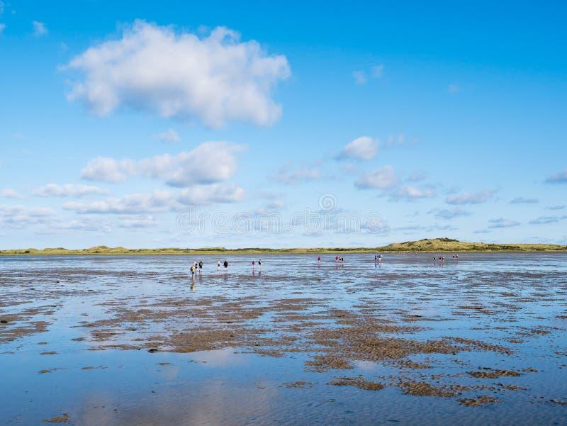 Groupe de personnes mudflat augmentant sur Waddensea à marée basse de Frise à l'île occidentale Ameland, Pays-Bas de Frisian photos libres de droits