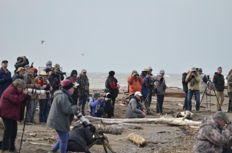 groupe de personnes observation d'oiseau à l'astuce du point Pelee image stock