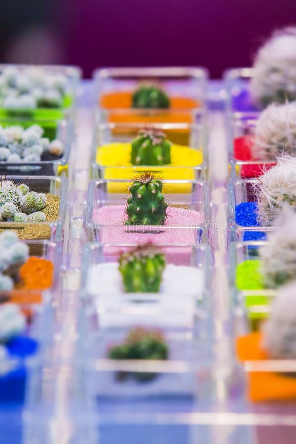 Groupe de petits divers cactus dans des pots avec l'au sol coloré de sable Foyer sélectif images libres de droits