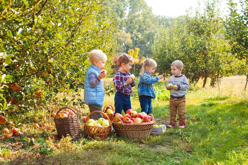 Groupe de petits enfants mangeant des pommes au verger d'arbre images stock