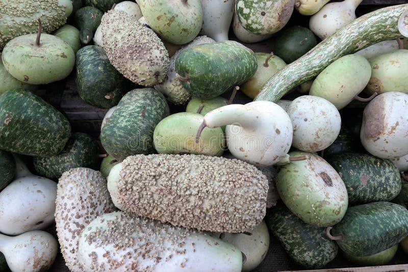 Groupe de petits potirons décoratifs blancs verts de potirons Plein franc image stock