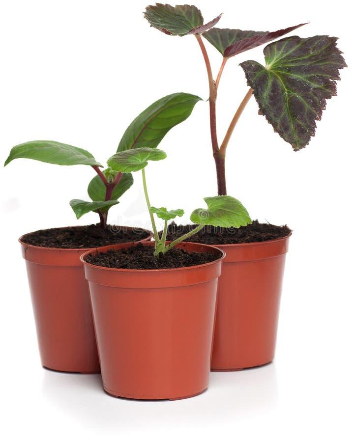 Groupe de plantes de centrale images libres de droits