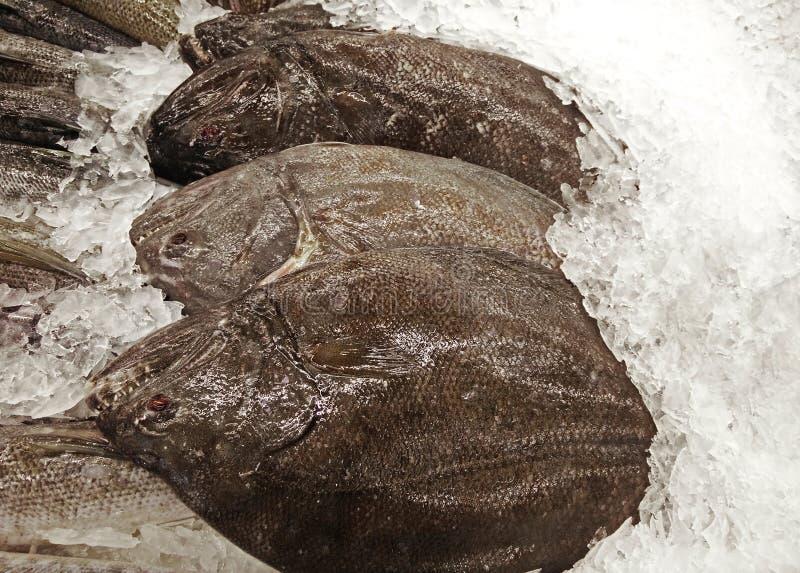 Groupe de poissons épineux frais de turbot sur la glace image libre de droits
