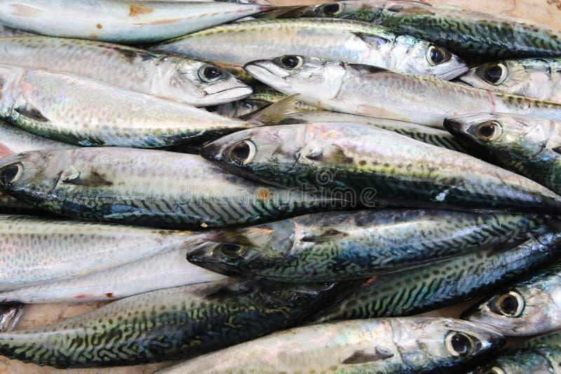 Groupe de poissons frais de sardines photo libre de droits