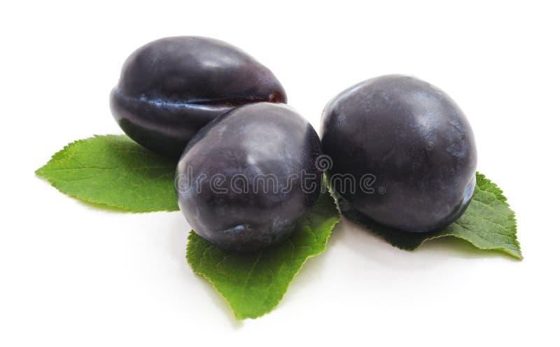 Groupe de prunes avec des feuilles de prune images stock