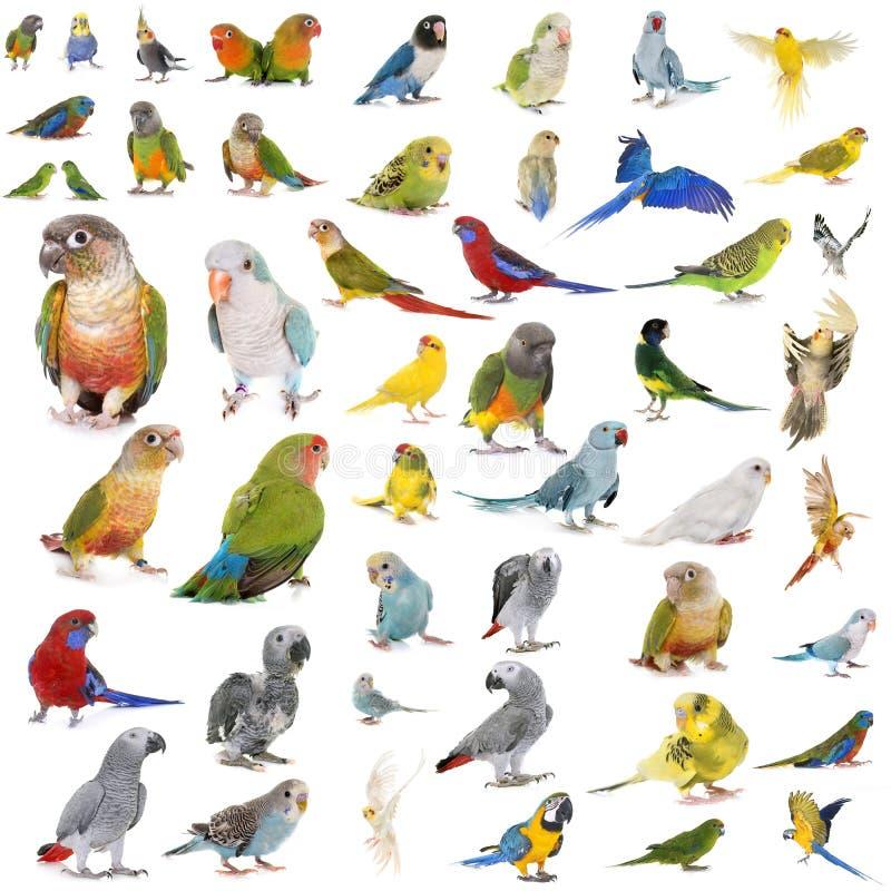 Groupe de Psittacidae photos stock
