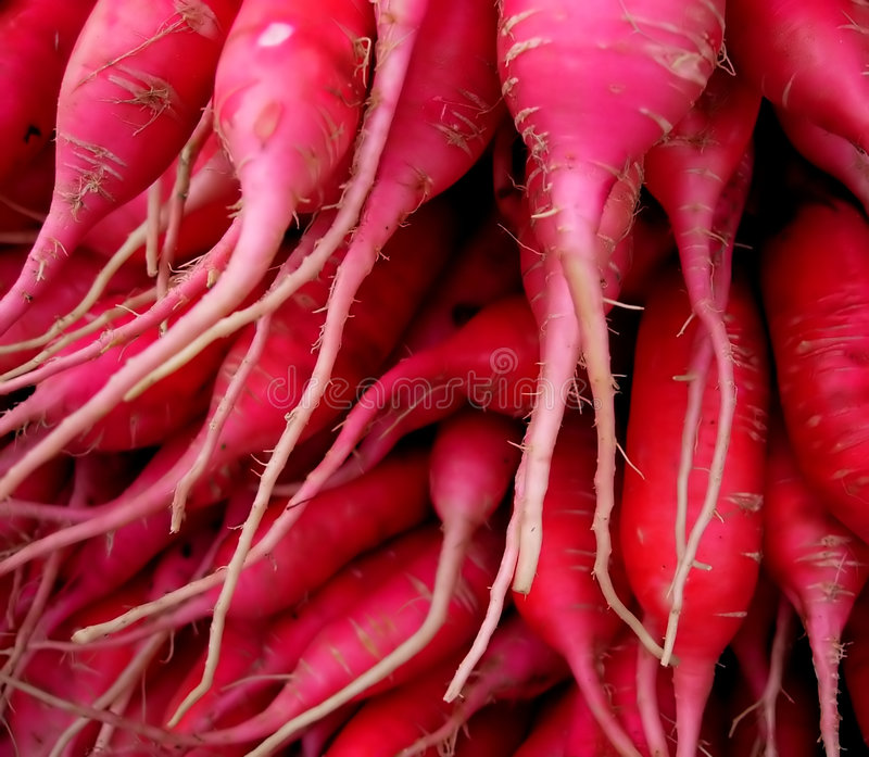 Groupe de radis. image stock