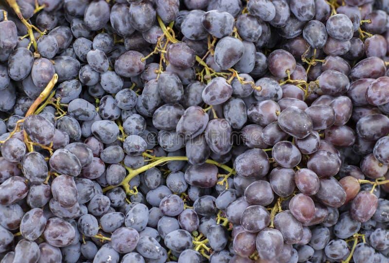 Groupe de raisins bleu-foncé mûrs, acuité élevée images stock