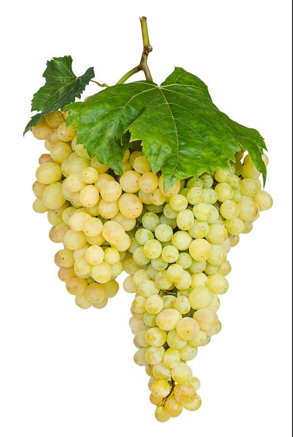 Groupe de raisins mûrs d'isolement sur le blanc image libre de droits