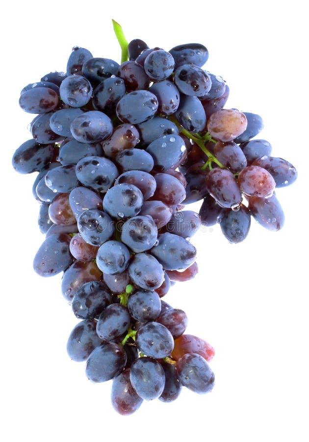 Groupe de raisins pourprés photo libre de droits