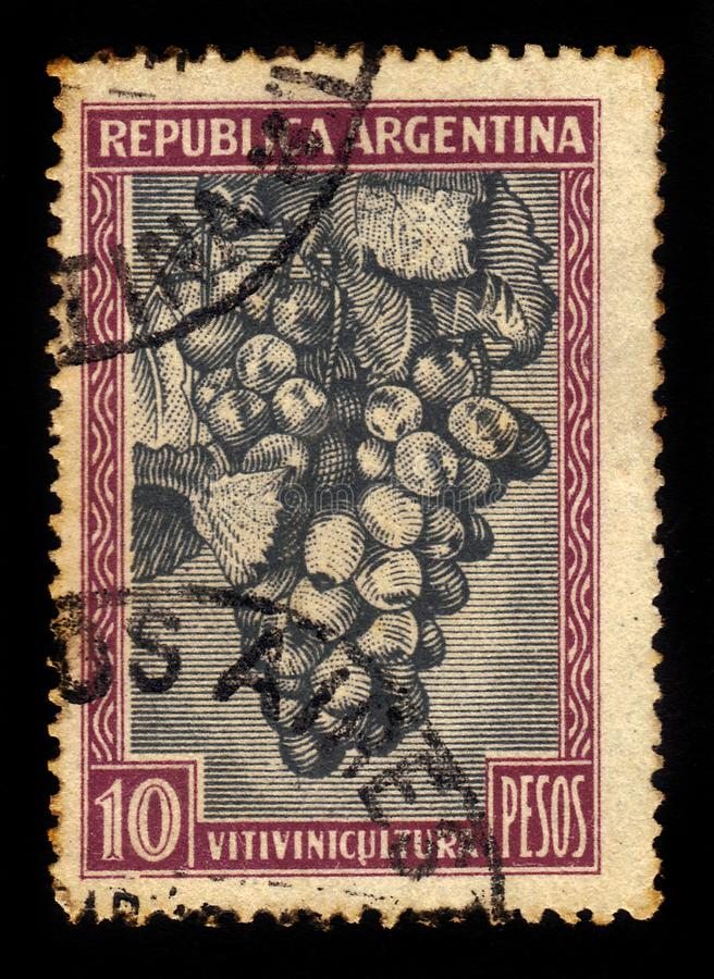Groupe de raisins rouges photographie stock libre de droits