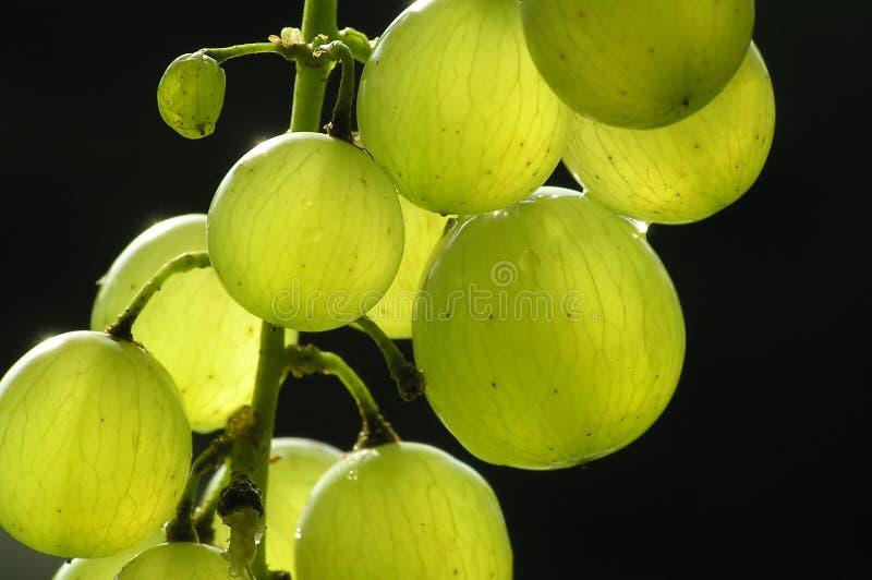 Groupe de raisins verts images libres de droits