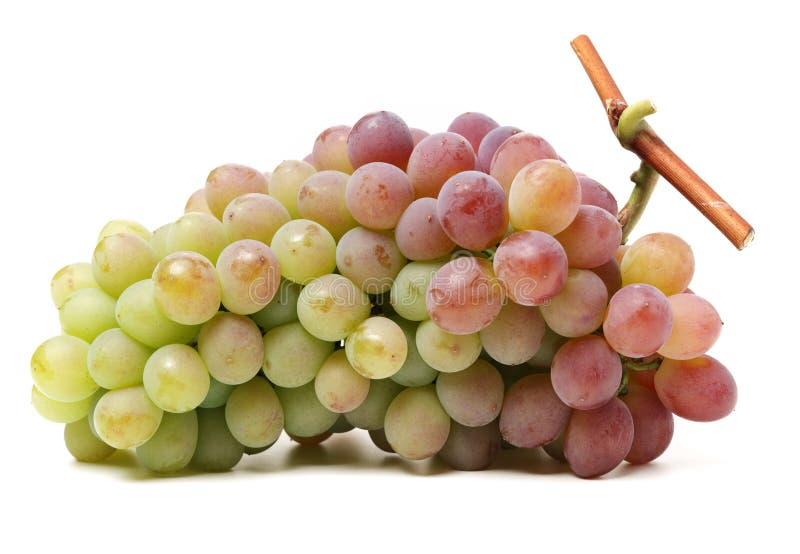 Groupe de raisins verts et rouges photos libres de droits