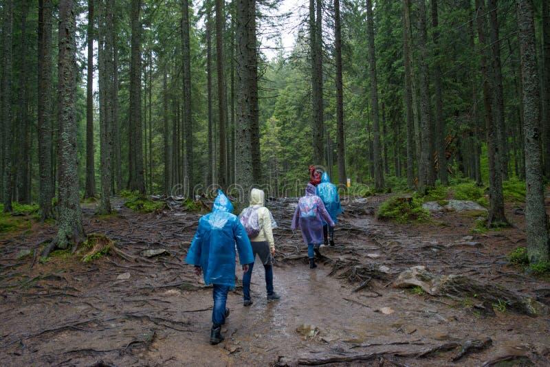 Groupe de randonneurs dans des manteaux de pluie marchant dans la forêt images libres de droits