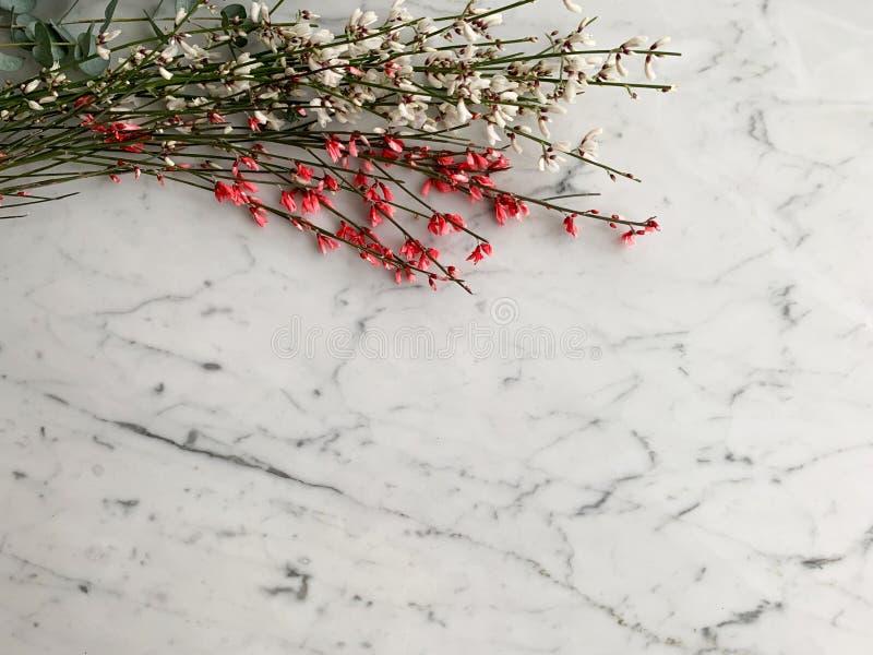 Groupe de rose fraîche et de genista blanc de drok des Pays-Bas sur le fond de table de marbre blanc et gris, vue supérieure photos stock