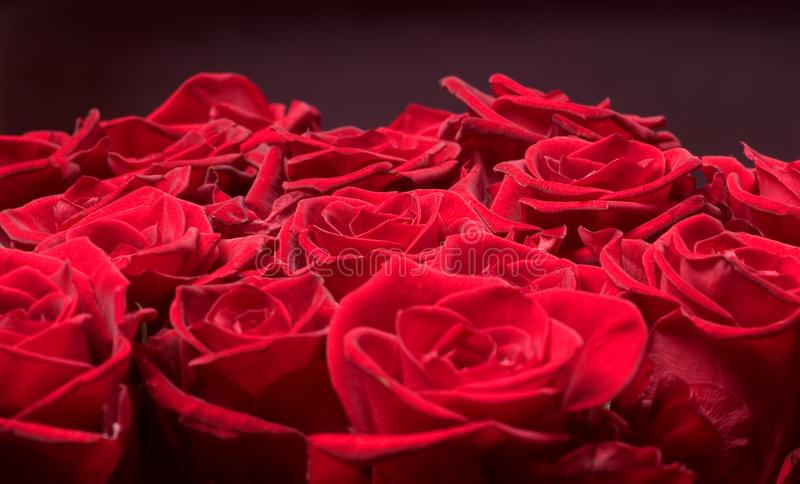 Groupe de roses photographie stock