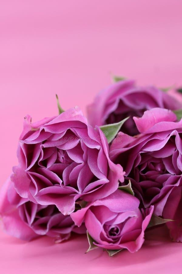 Groupe de roses photos libres de droits