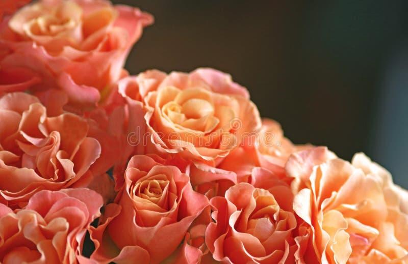 Groupe de roses de couleur orange images libres de droits