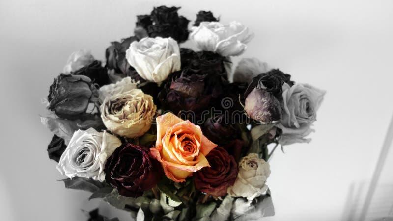 Groupe de roses noires et blanches image libre de droits