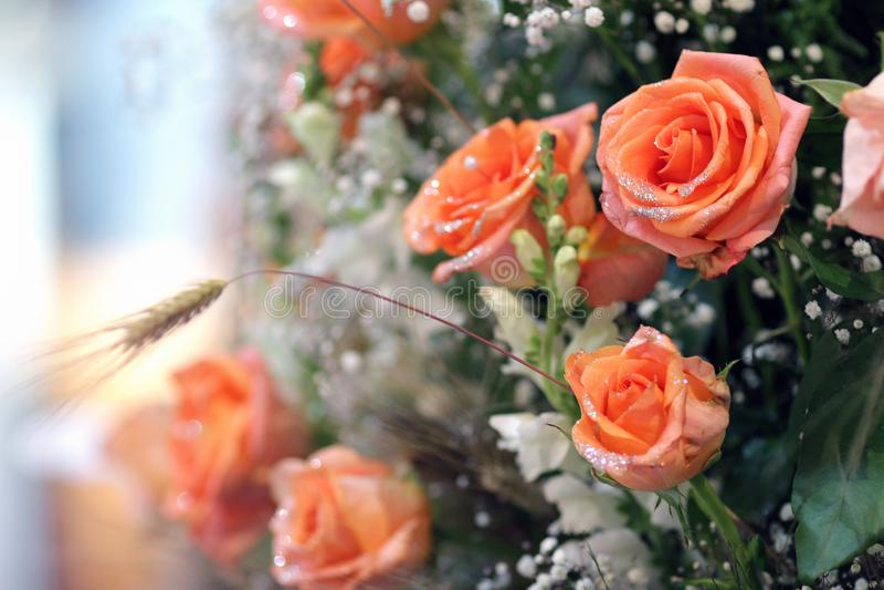 Groupe de roses oranges photo stock