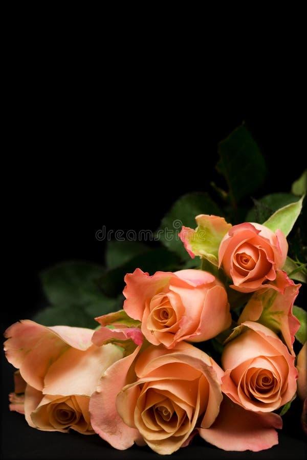 Groupe de roses oranges photos stock