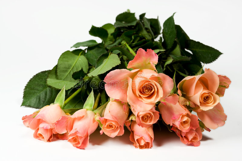 Groupe de roses roses photo stock
