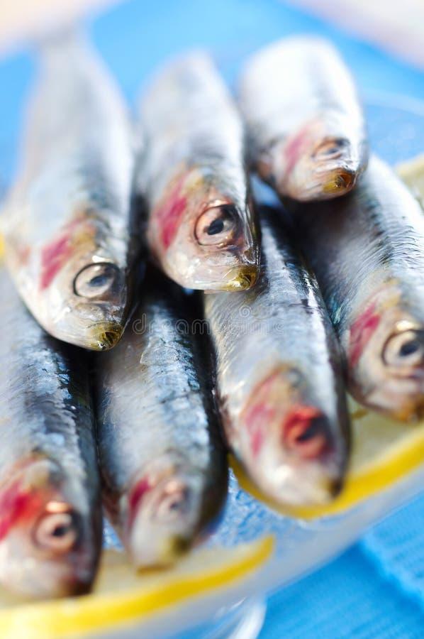 Groupe de sardines sur des parts de citron images stock