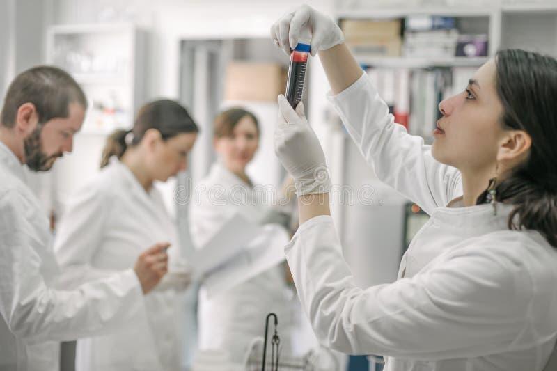 Groupe de scientifiques travaillant avec les échantillons liquides de tube à essai photographie stock