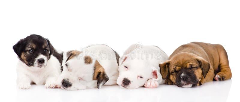 Groupe de sommeil de chiots Sur le fond blanc photographie stock