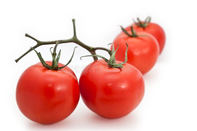 Groupe de tomates images libres de droits