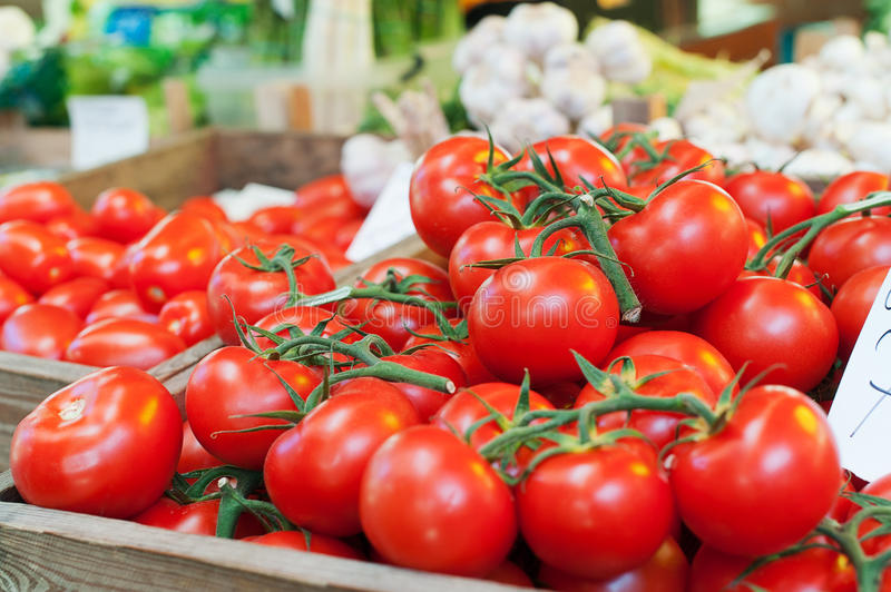 Groupe de tomates image stock