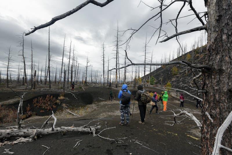 Groupe de touristes et de voyageurs marchant dans Forest Dead Wood mort sur la péninsule de Kamchatka photos stock
