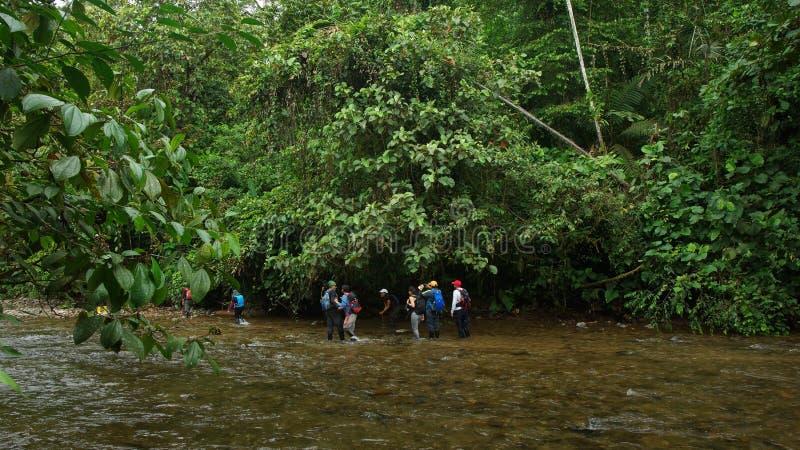 Groupe de touristes traversant la rivière de Mashpi dans le secteur de forêt de nuage en Equateur photographie stock