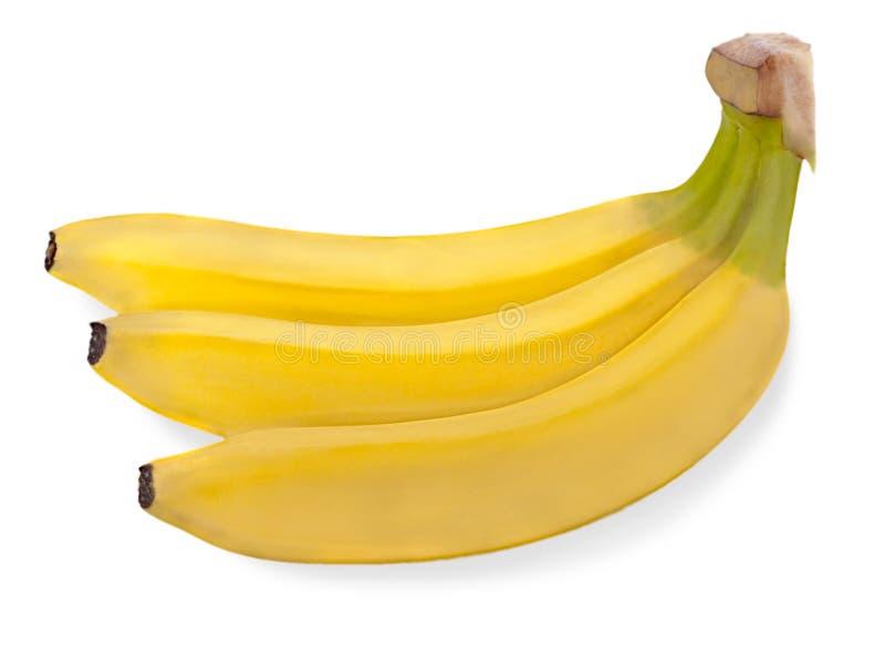 Groupe de trois bananes d'isolement sur le blanc photos libres de droits